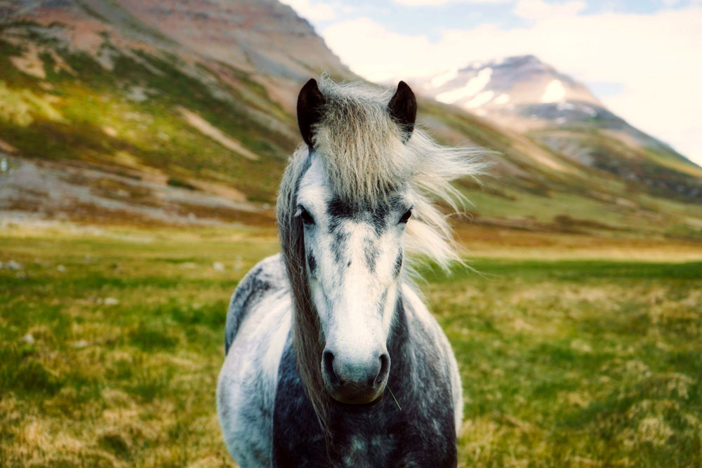 horses, cbd benefits, equines, compare cbd