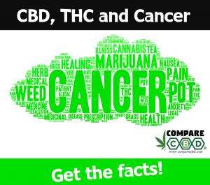 thc and cbd, cbd, cure cancer with cannabis, compare cbd