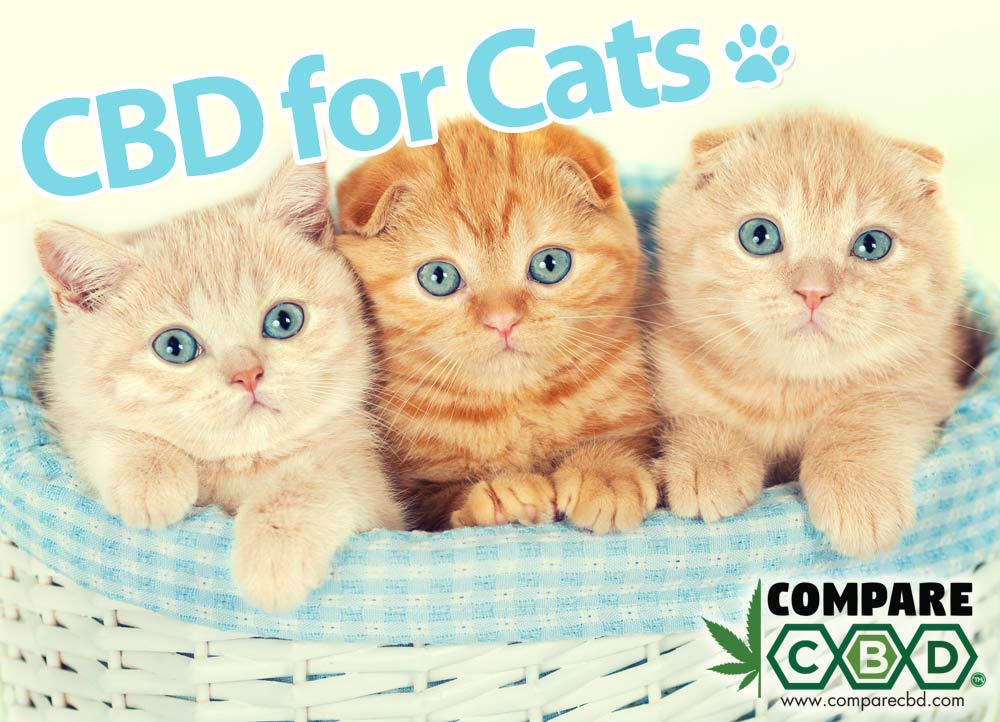 Cats, CBD, CBD Oil for Cats, Buy CBD Online, Compare CBD, HempWorx Pets CBD