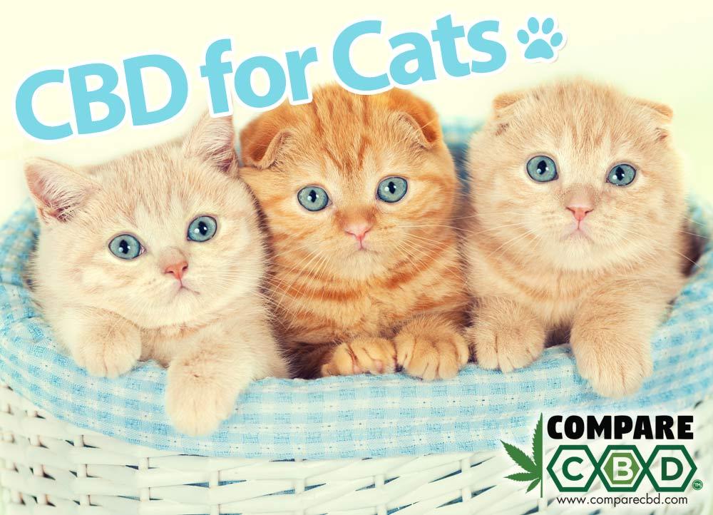 Cats, CBD, CBD Oil for Cats, Buy CBD Online, Compare CBD, HempWorx Pets CBD
