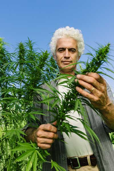 hemp farmers wanted, sell your hemp crop, global hemp, compare cbd, hemp buyers