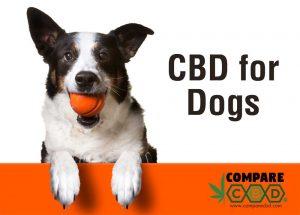 dog CBD, canine CBD, CBD for dogs, buy cbd, buy hemp, compare cbd