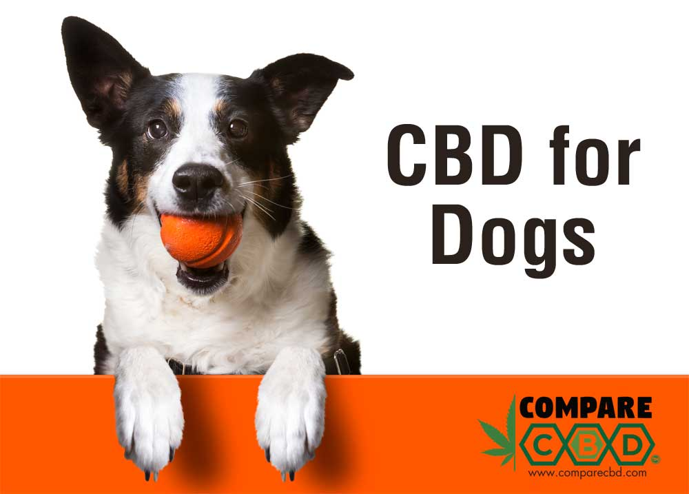 dog CBD, canine CBD, CBD for dogs, buy cbd, buy hemp, compare cbd